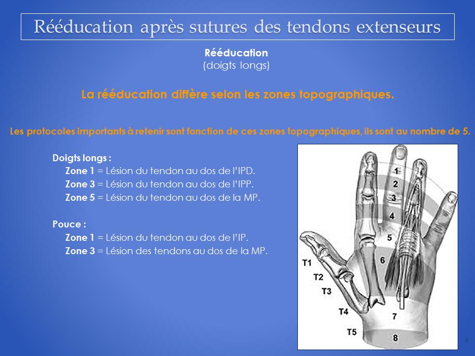 kine-main-grenoble-kinesitherapeute-reeducation-tendon-4